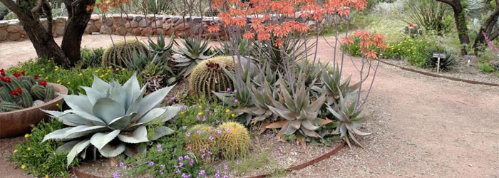 8 Arizona Garden Sights to See Before You Landscape