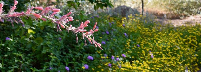Top Ten Water-Friendly Landscape Tips