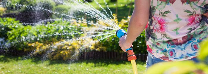 Irrigation: The Backbone Of A Healthy Landscape