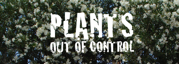 Plants: Out of Control